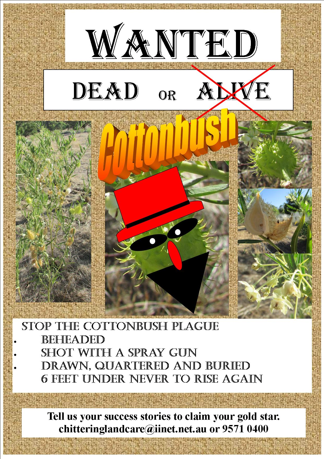 Dead or alive Cottonbush poster